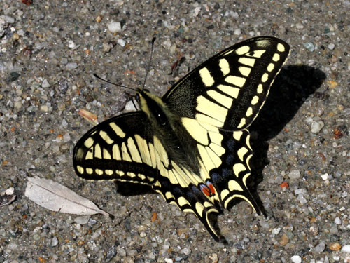 Photo: machaon